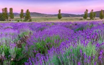 Provence – mehr als nur Lavendel