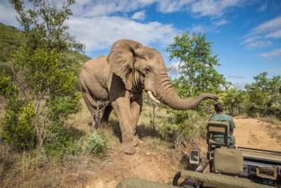 Kruger Nationalpark, Südafrika