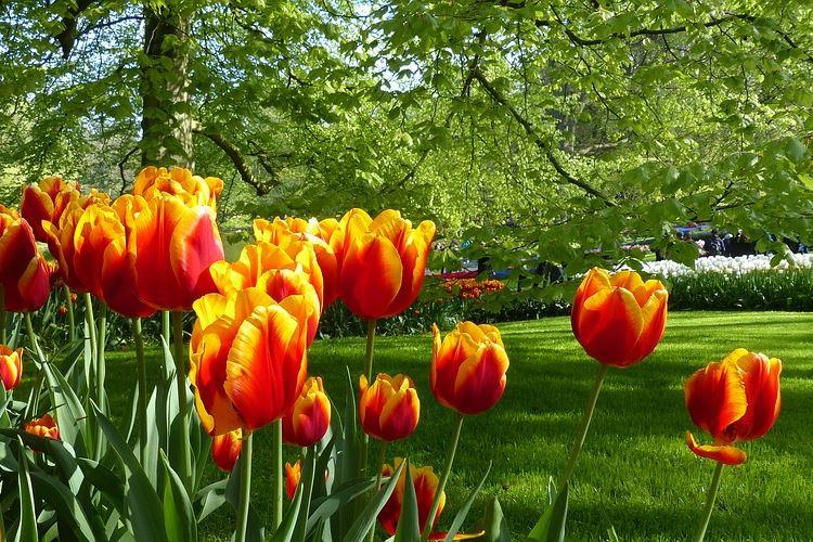 Amsterdamer Park