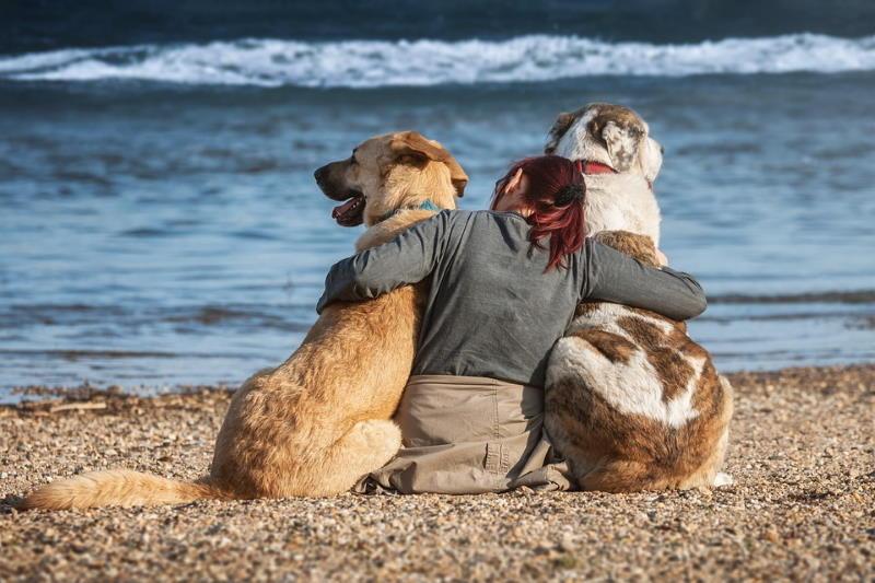 Urlaub mit Vierbeiner
